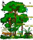Rainforest jungle layers vector illustration. Vector Green Tropical Forest jungle with different animals. Royalty Free Stock Photography