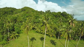 Rainforest and jungle. Palm trees. Philippines. Rainforest and jungle Philippines Beautiful nature stock video