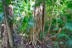 Rainforest jungle in Riviera Maya of Mexico Stock Photo
