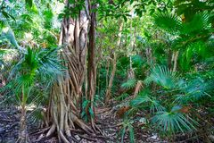 Rainforest jungle in Riviera Maya of Mexico Royalty Free Stock Images