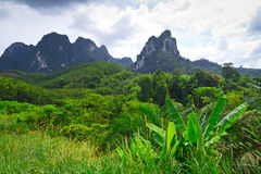 Rainforest of Khao Sok National Park. In Thailand Stock Photo