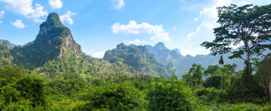 Rainforest of Khao Sok National Park Royalty Free Stock Photography