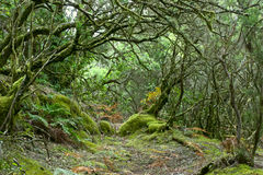 Rainforest of La Gomera Stock Images
