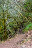 Rainforest, La Gomera. Green and mossy rainforest of La Gomera, Canary islands stock images