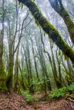 Rainforest, La Gomera. Green and mossy rainforest of La Gomera, Canary islands royalty free stock photo