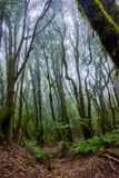 Rainforest, La Gomera. Green and mossy rainforest of La Gomera, Canary islands royalty free stock photos