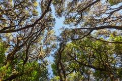 Rainforest in La Gomera island - Canary Spain Royalty Free Stock Photos