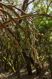 Rainforest in La Gomera island - Canary Spain Stock Photo