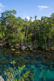Rainforest lake Stock Photo