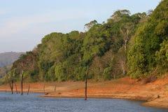 Rainforest lake shoreline Stock Photos