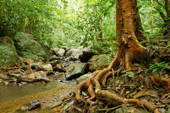 Rainforest landscape Stock Photo