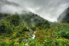 Rainforest landscape Royalty Free Stock Photo