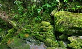Rainforest landscape Royalty Free Stock Photo