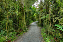 Rainforest landscape Stock Photography