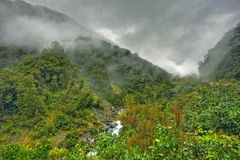 Rainforest landscape Royalty Free Stock Photography