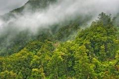 Rainforest Landscape Royalty Free Stock Images