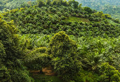 Rainforest landscape. Royalty Free Stock Photography