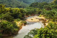 Rainforest landscape. Stock Image