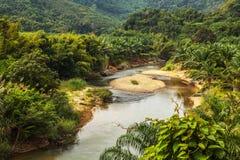 Rainforest landscape. Stock Image