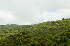 Rainforest landscape in Monteverde Costa Rica. Rainforest landscape view in Monteverde Costa Rica Stock Image