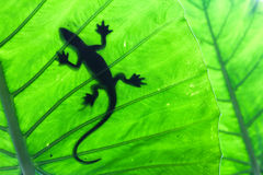 Rainforest life. Lizard on leaf in rainforest Stock Photo