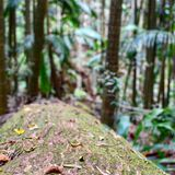 Rainforest log detail royalty free stock photo