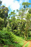 Rainforest. Lush green rain forest in northern Madagascar Royalty Free Stock Image