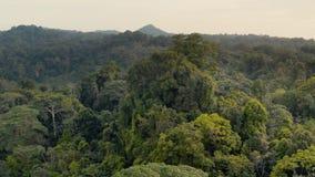 Rainforest, Lush Humid Woods
