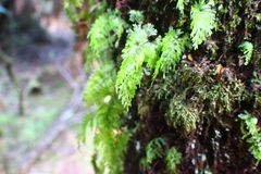 Rainforest macro. Moss on tree. Stock Photo