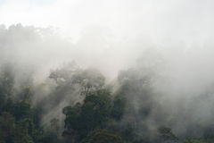 Rainforest malaysia. The rainforest at a misty morning Royalty Free Stock Photos