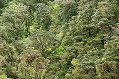 Rainforest royalty free stock images