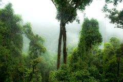 Rainforest in Mist, Jungle, Rainforest, Daintree Forest near Cairnes, green jungle, Queensland, Australia stock photos