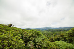 Rainforest in Monteverde cloud forest reserve. Costa Rica Royalty Free Stock Photography