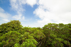 Rainforest in Monteverde cloud forest reserve Royalty Free Stock Photo