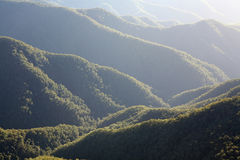 Rainforest Morning. Detail of rainforest mountain ridges with early morning mist, New South Wales, Australia Stock Photos