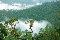 Rainforest morning fog. Rainforest landscape in Morning fog, Doi Kiew Lom viewpoint, Pangmapha, Thailand Stock Photos