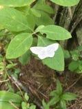 Rainforest moth in bush Royalty Free Stock Photos