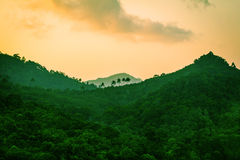 Rainforest in the mountains Royalty Free Stock Images