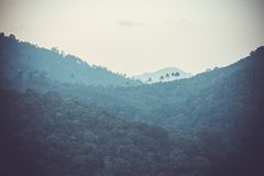 Rainforest in the mountains Stock Photo