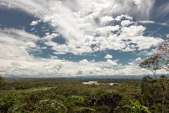 Rainforest in the Napo River's basin. The Napo is a tributary to the Amazon River that rises in Ecuador on the flanks of the volcanoes of Antisana, Sinchulawa Stock Photos