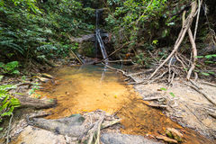 Rainforest natural pool Stock Photography