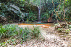 Rainforest natural pool Stock Images
