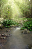 Rainforest nature stream  Stock Images