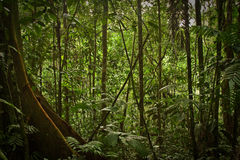 Rainforest nature, Yasuni National Park, Ecuador Stock Photo