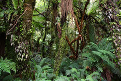 Rainforest, New Zealand Royalty Free Stock Photos