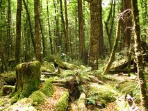 Rainforest New Zealand Stock Photography