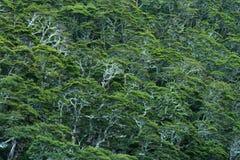 Rainforest in New Zealand Stock Image