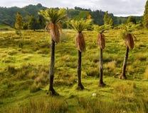 Rainforest, New Zealand Stock Images