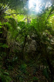 Rainforest. Palm trees and plants at jungle Stock Photography