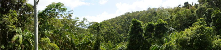 Rainforest panoramic. Rainforest Canopy as a panoramic round view over Tree tops Royalty Free Stock Photo